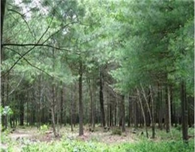 Lot 2 South St., Middleboro, MA 02346 - MLS#: 72194379
