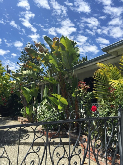 242 Maria Street, Santa Clara, CA 95050 - MLS#: 52158631