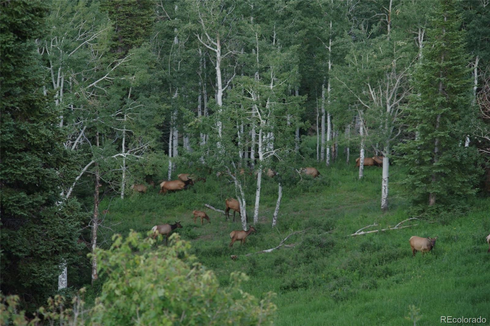 MLS# 1757508 - 17 - 15223 County Road 56 , Steamboat Springs, CO 81639