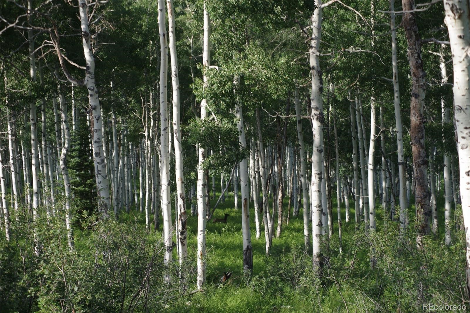 MLS# 1757508 - 18 - 15223 County Road 56 , Steamboat Springs, CO 81639