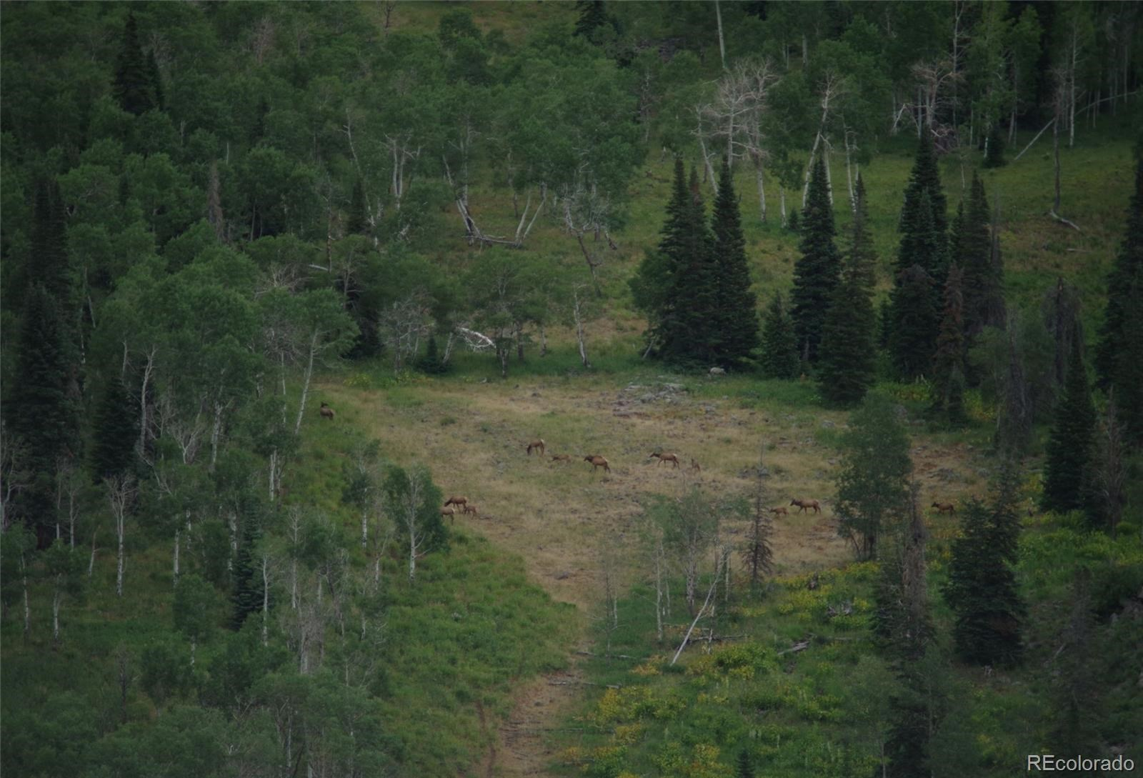 MLS# 1757508 - 5 - 15223 County Road 56 , Steamboat Springs, CO 81639