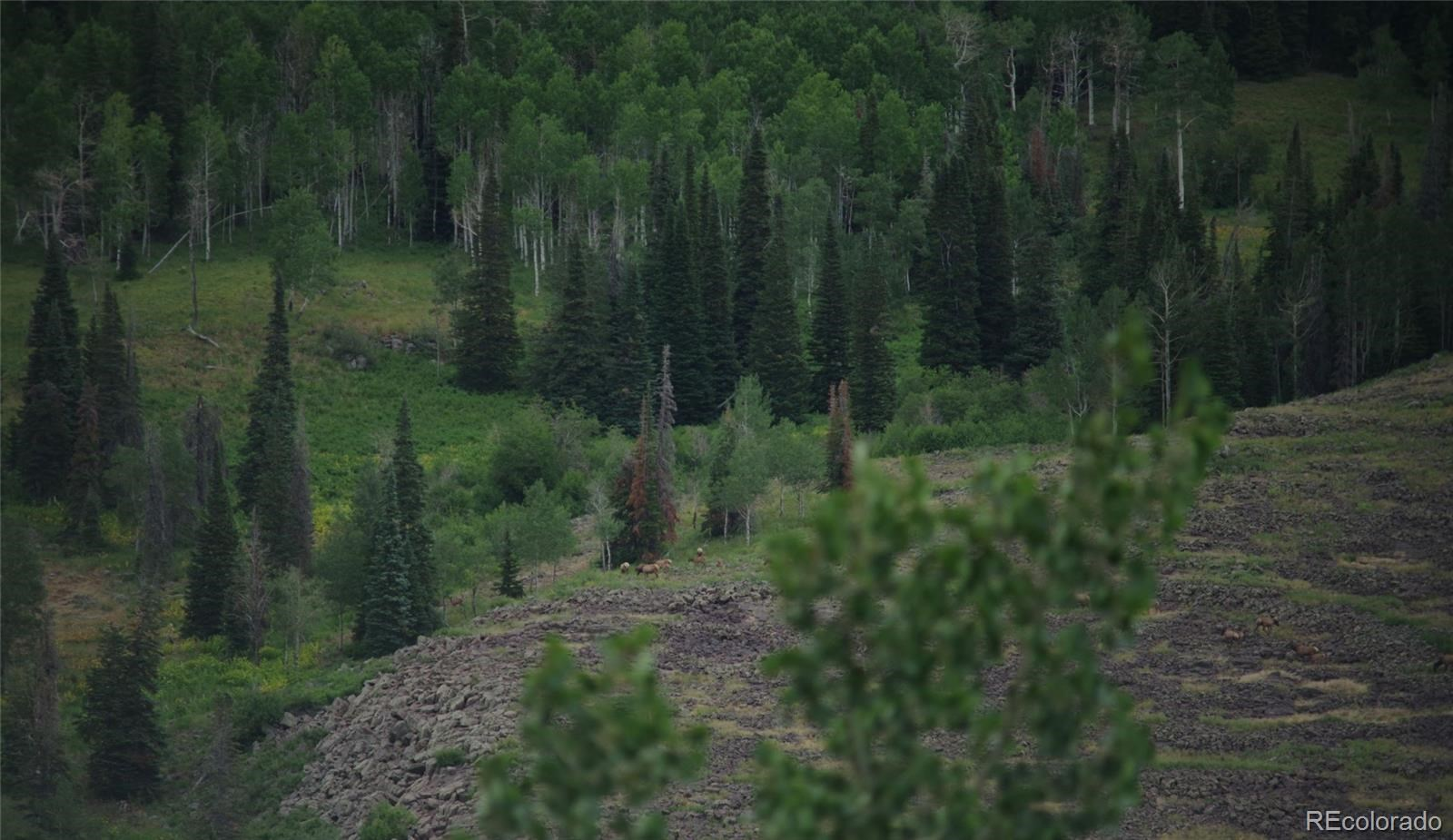 MLS# 1757508 - 9 - 15223 County Road 56 , Steamboat Springs, CO 81639