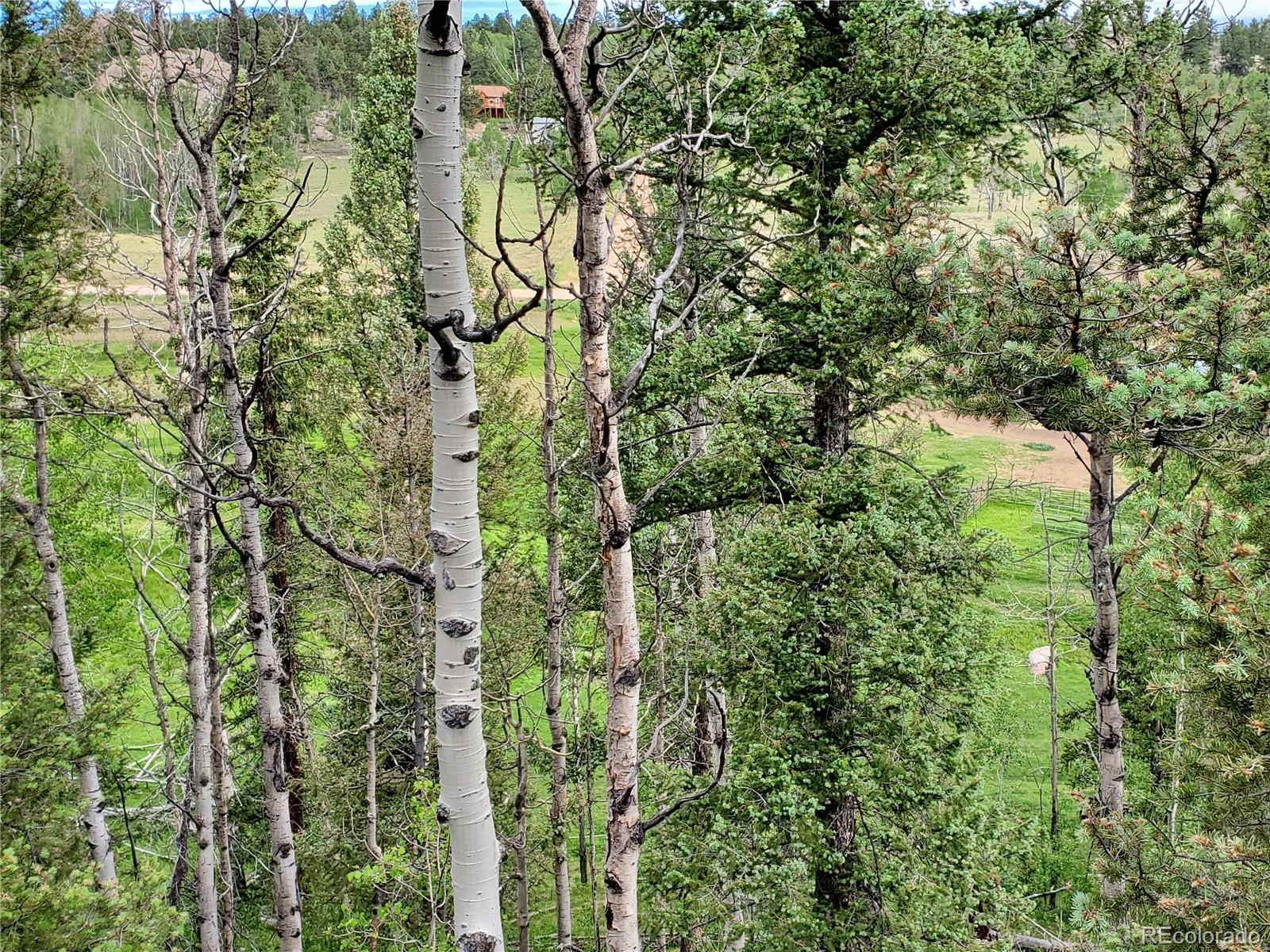 MLS# 2610058 - 10 - 71 Alpine Drive, Florissant, CO 80816