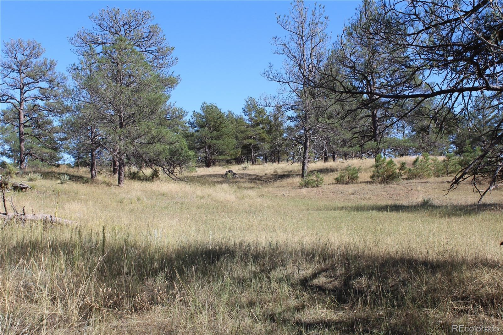 MLS# 2877174 - 12 - Cattle Circle, Kiowa, CO 80117