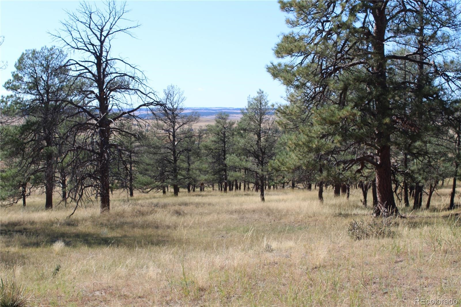 MLS# 2877174 - 4 - Cattle Circle, Kiowa, CO 80117