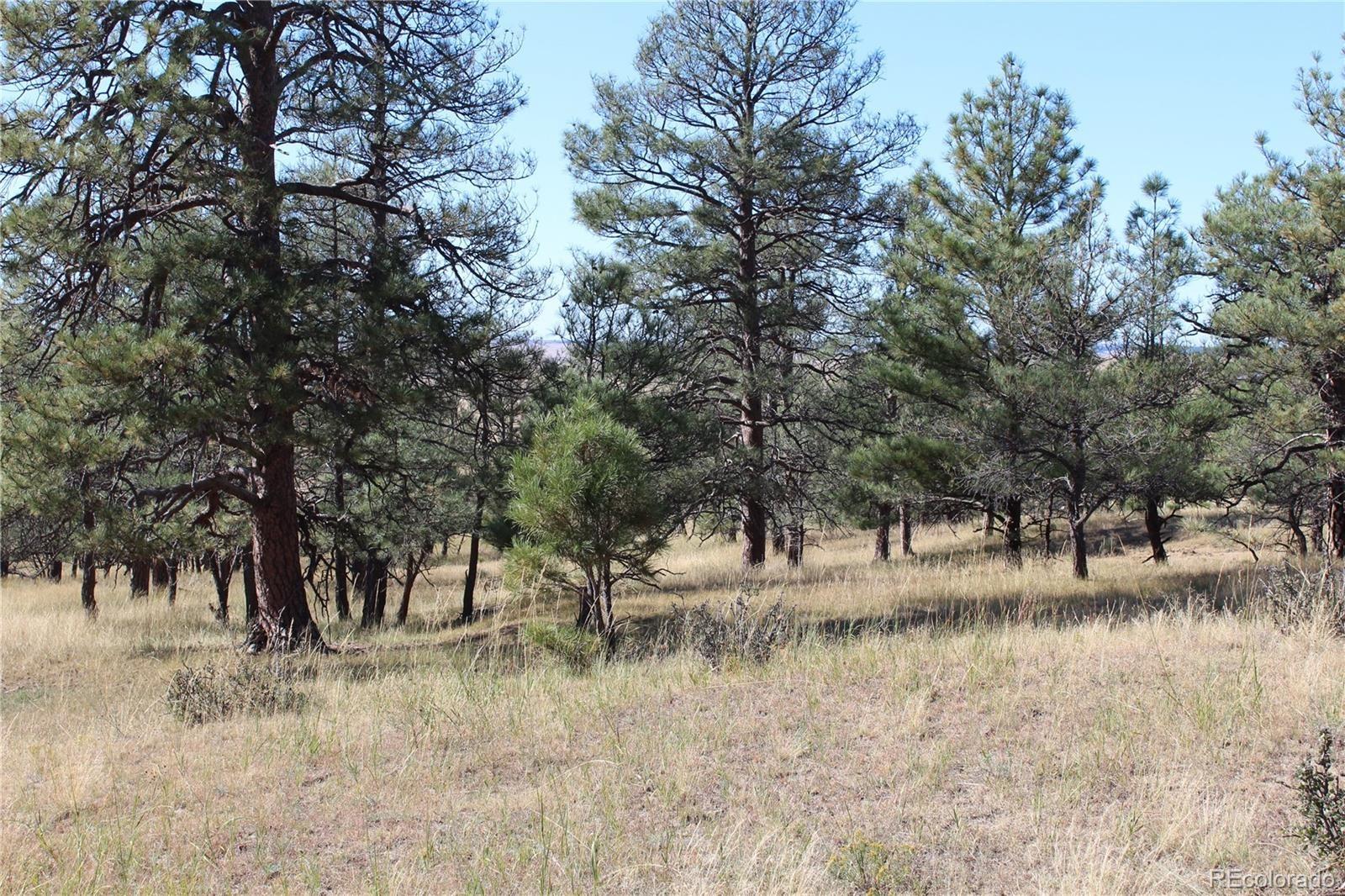 MLS# 2877174 - 5 - Cattle Circle, Kiowa, CO 80117