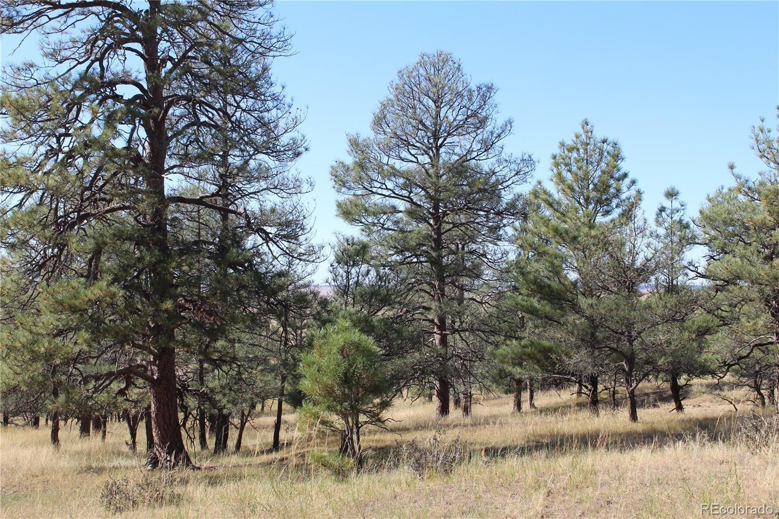 MLS# 2877174 - 6 - Cattle Circle, Kiowa, CO 80117
