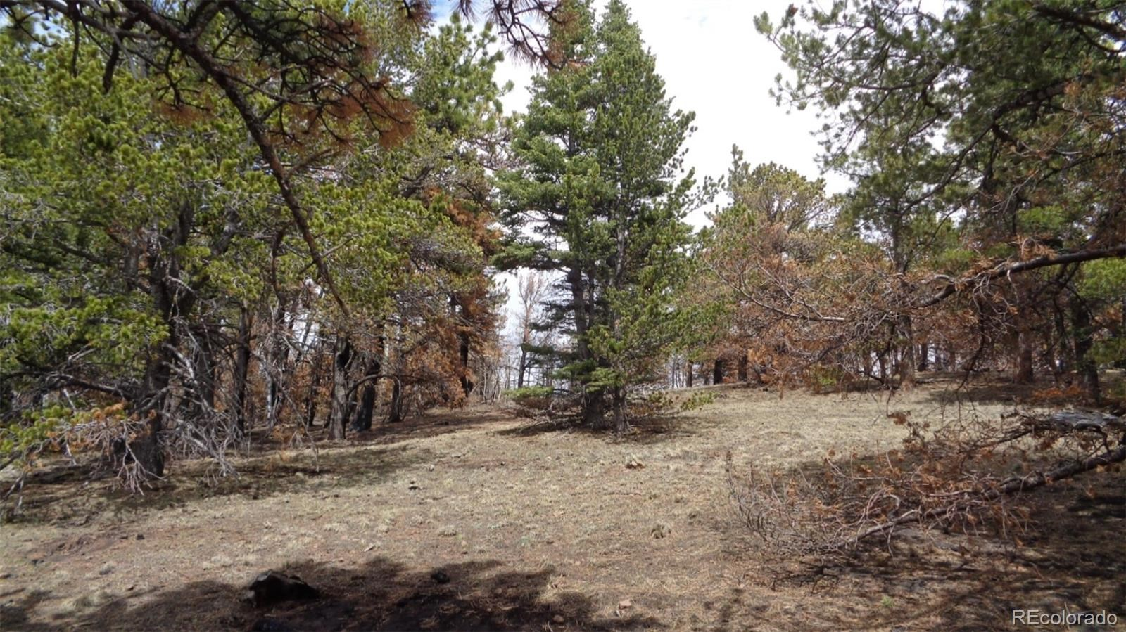 MLS# 2982549 - 3 - 2117 Packer Place, Fort Garland, CO 81133