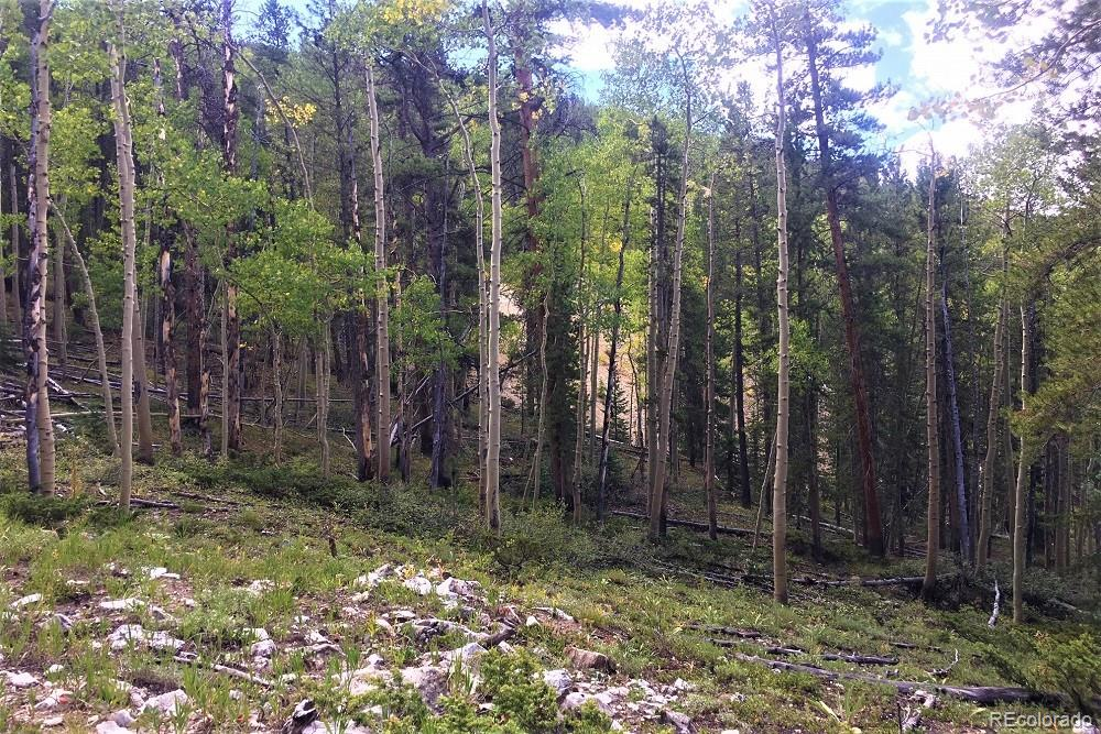MLS# 5305728 - 15 - Forest Service Rd. 890 Forest, Gunnison, CO 81230