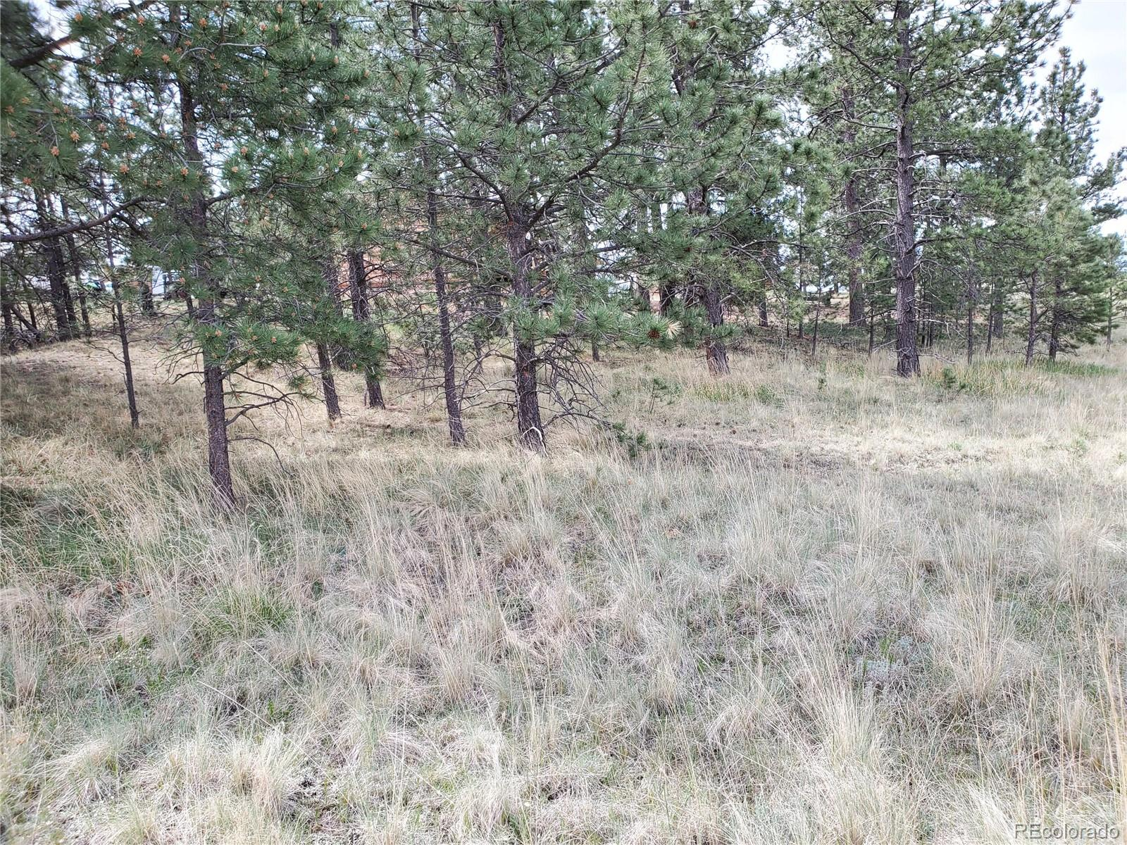MLS# 5330137 - 11 - 484 Duesouth Road, Florissant, CO 80816