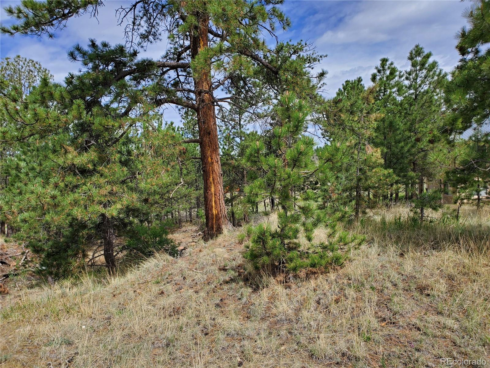 MLS# 5330137 - 6 - 484 Duesouth Road, Florissant, CO 80816