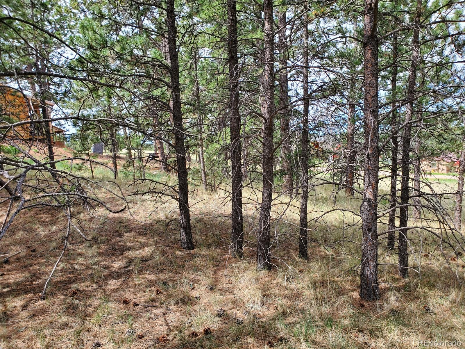 MLS# 5330137 - 7 - 484 Duesouth Road, Florissant, CO 80816