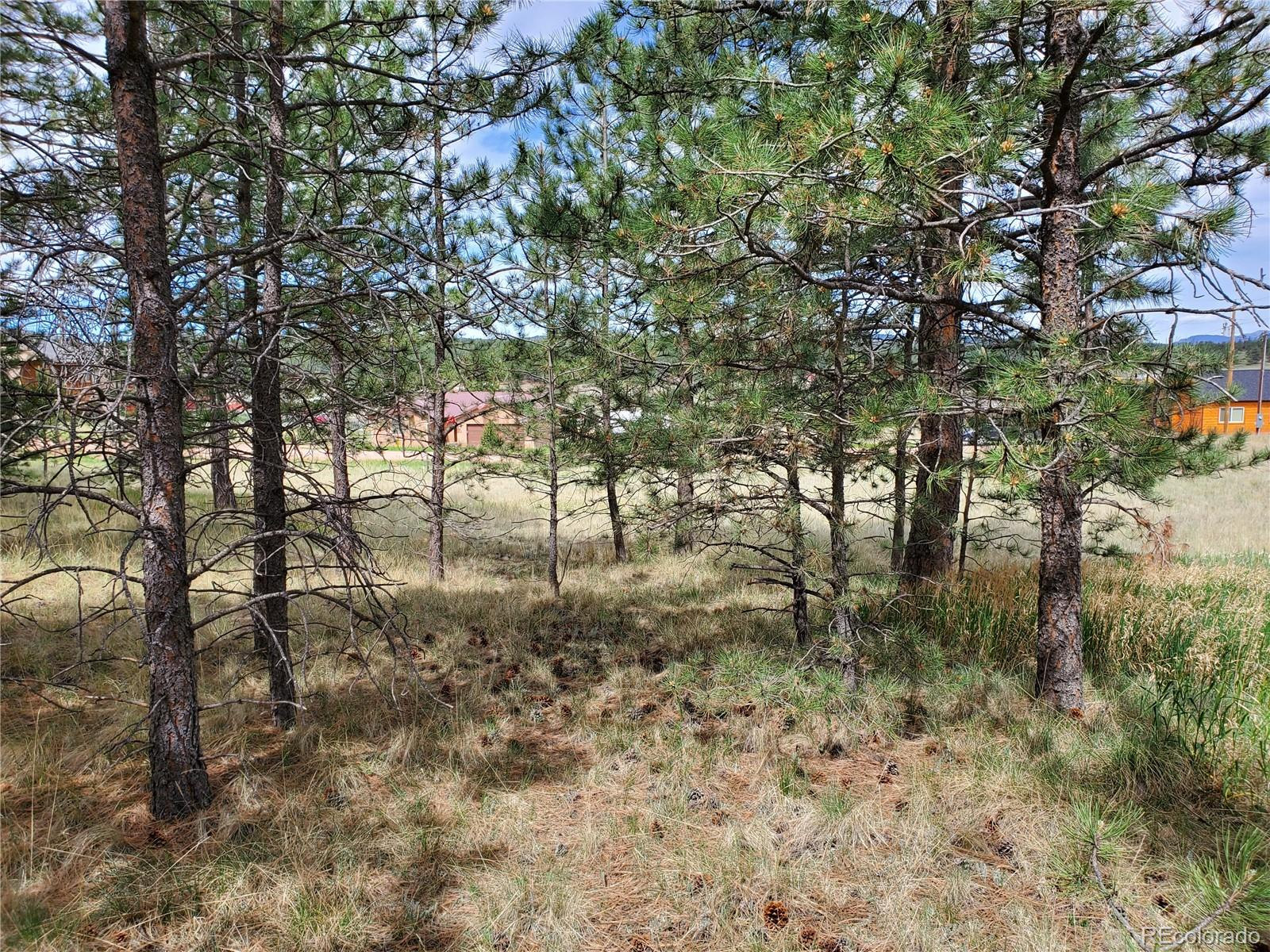 MLS# 5330137 - 8 - 484 Duesouth Road, Florissant, CO 80816