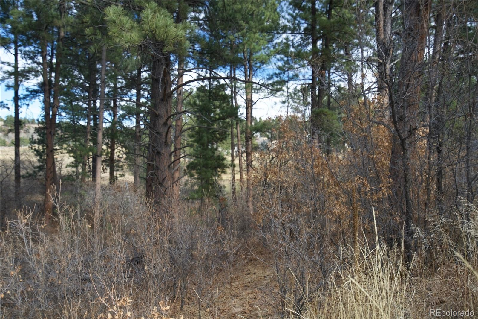 MLS# 5821911 - 2 - 1151 Country Club Parkway, Castle Rock, CO 80108