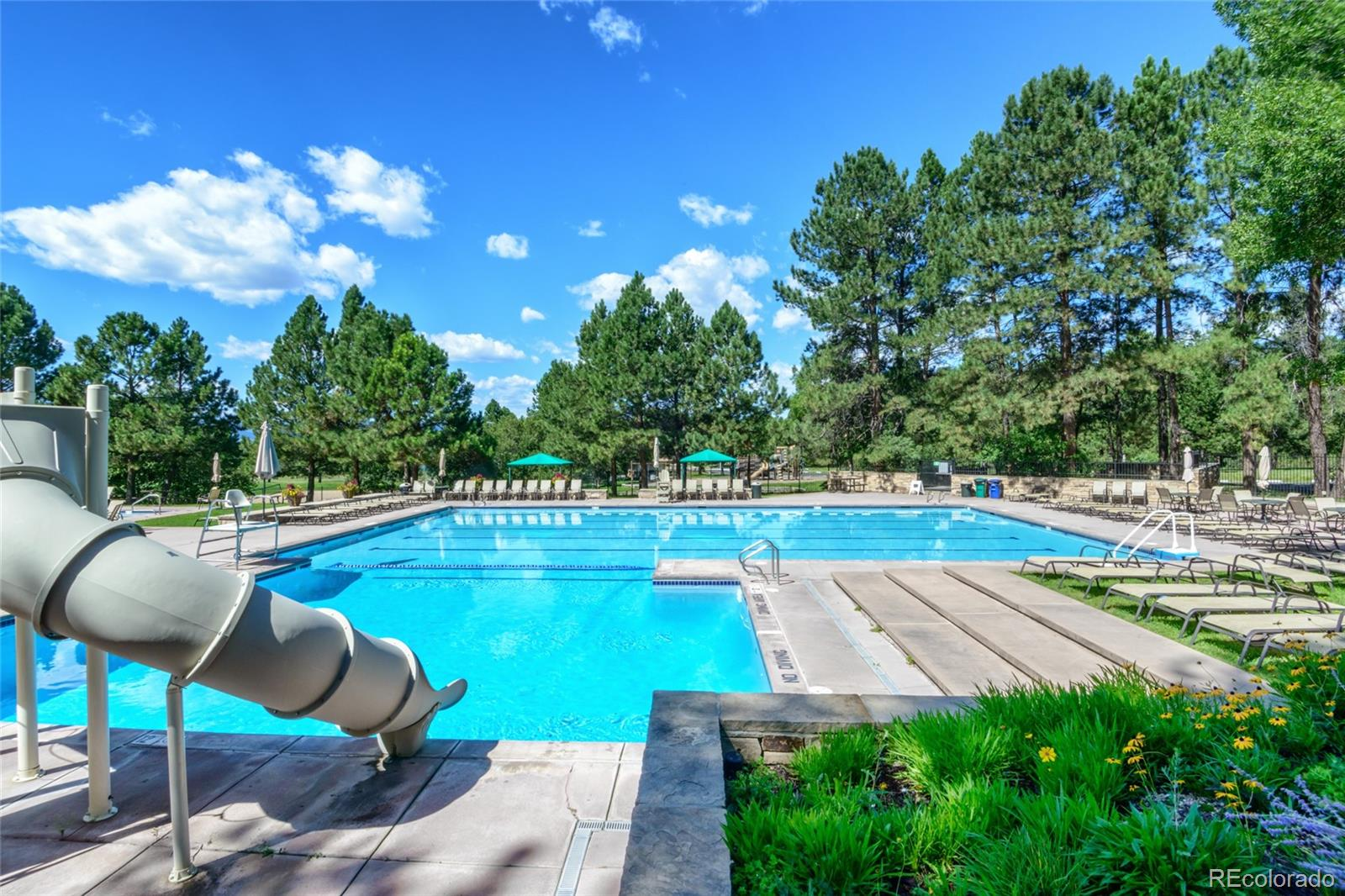 MLS# 7959037 - 37 - 1041 Meteor Place, Castle Rock, CO 80108