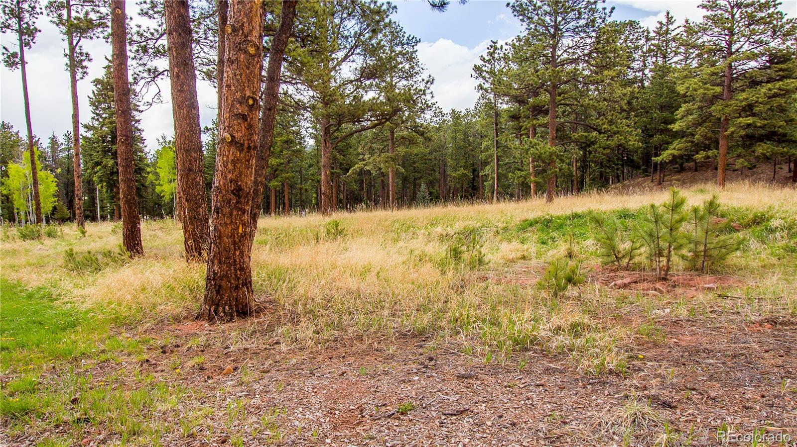MLS# 8168025 - 5 - 1215 Cottontail Trail, Woodland Park, CO 80863