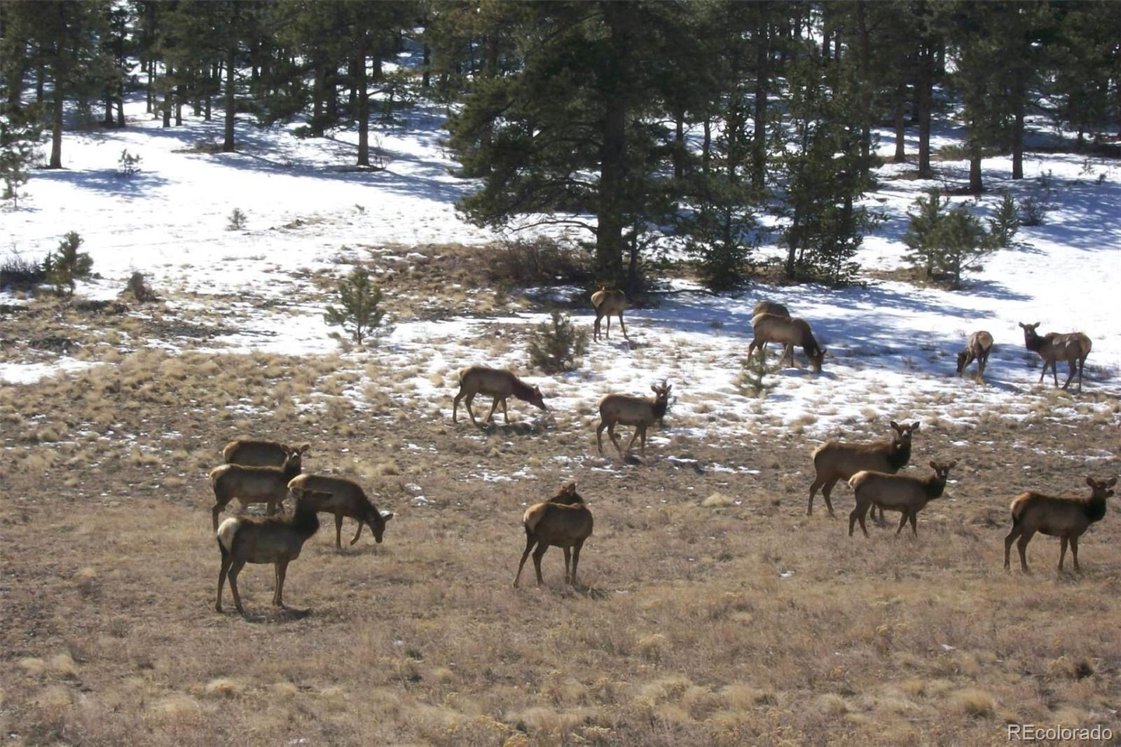 MLS# 8182693 - 36 - 396 Eagle Nest Trail, Guffey, CO 80820