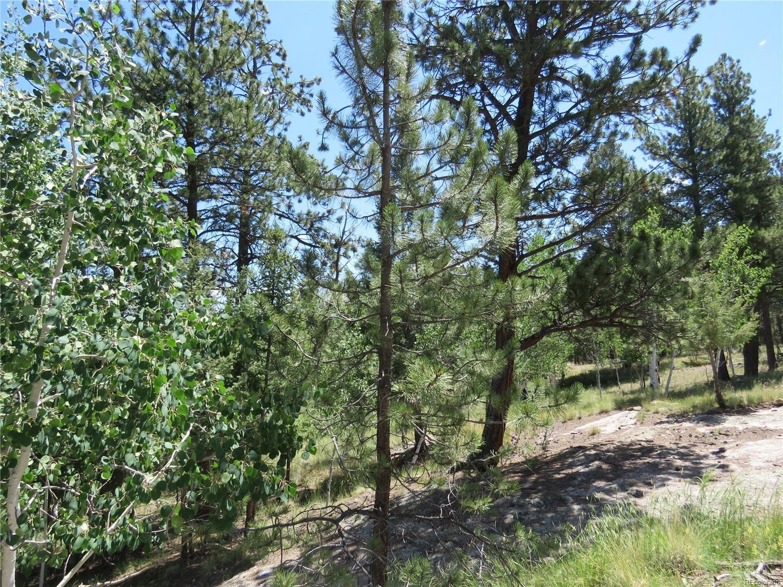 MLS# 8486542 - 14 - 43 Harness Trail, Florissant, CO 80816