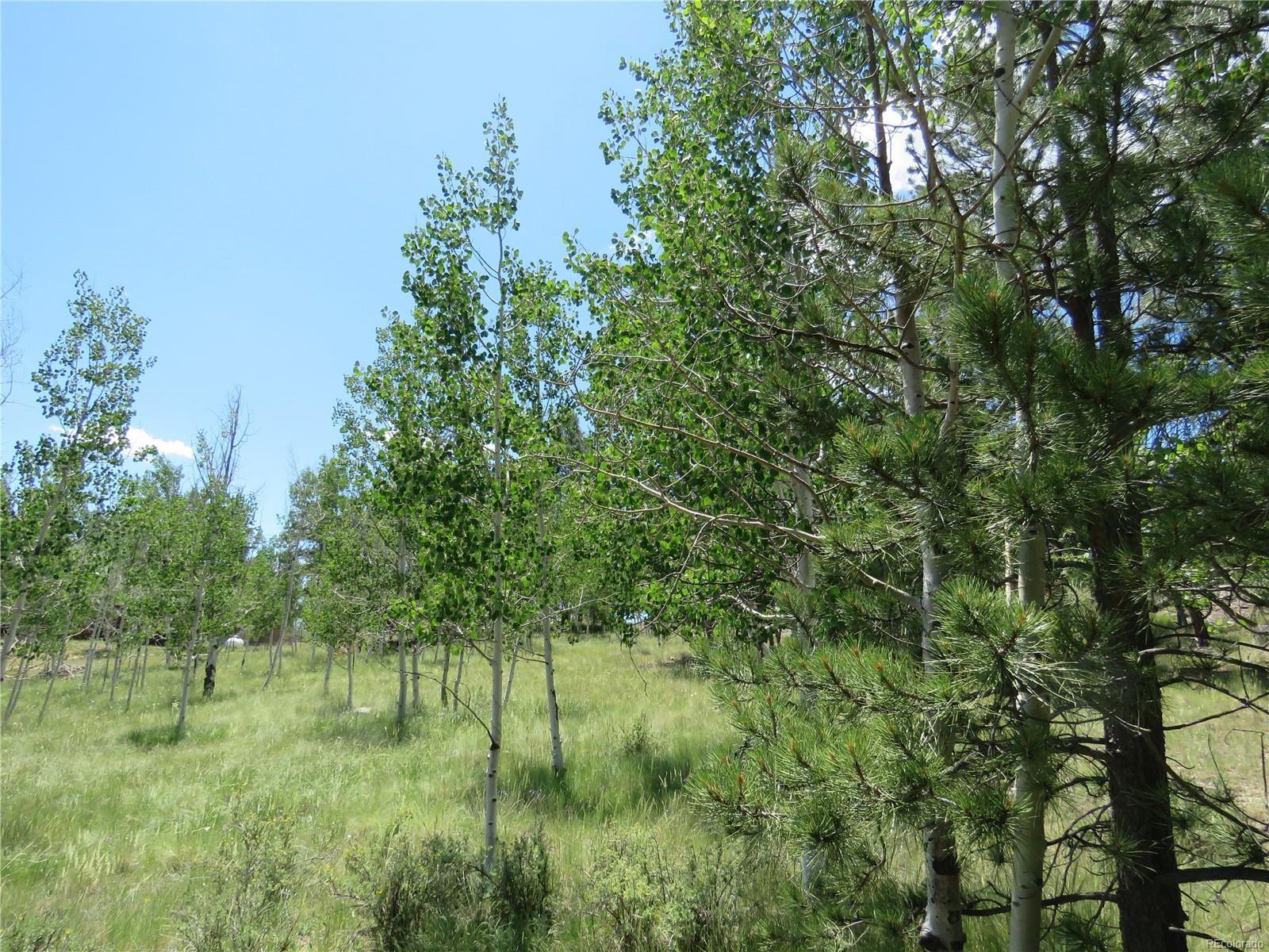 MLS# 8486542 - 30 - 43 Harness Trail, Florissant, CO 80816