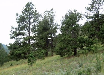125 Independence Road, Cripple Creek, CO 80813 - MLS#: 8790548