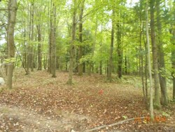 lot 19   Reichs Landing Otisco NY 13110