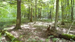 Lot 1   West Lake Road Cazenovia NY 13035